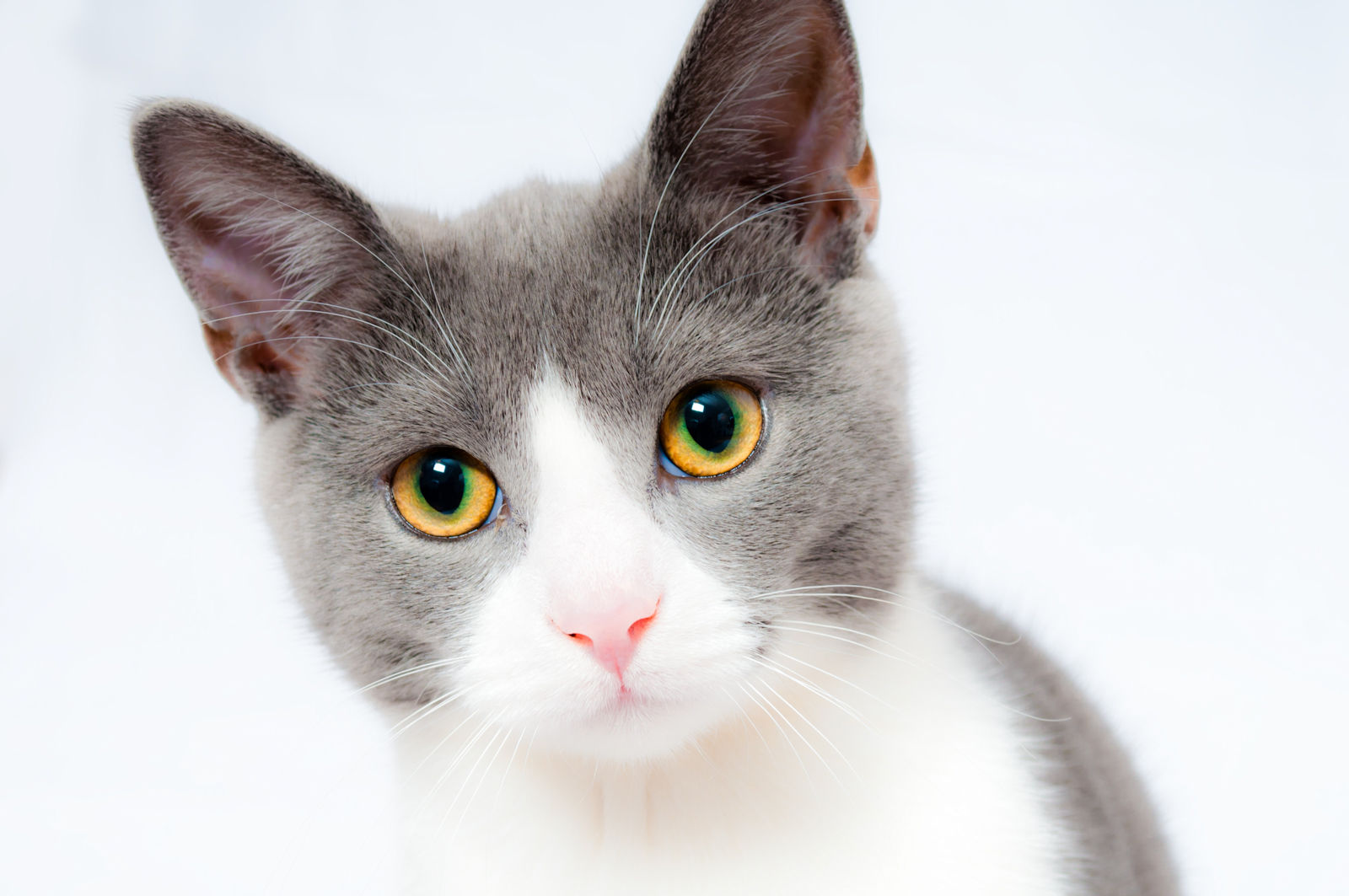 Czym można zarazić się od kota?